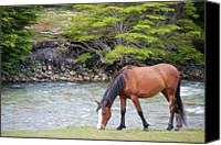 Horse Standing Canvas Prints - Horse Grazing Canvas Print by Thanks for choosing my photos.