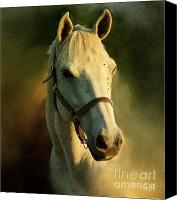 Horse Photographs Canvas Prints - Horse Head Portriat Canvas Print by George Lai