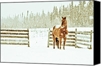 Horse Standing Canvas Prints - Horse In A Snowstorm Canvas Print by Roberta Murray - Uncommon Depth