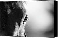Black And White Canvas Prints - Horse In Black And White Canvas Print by Malcolm MacGregor
