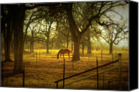 Gulf Coast States Canvas Prints - Horse In Morning Sun Eating Grass Canvas Print by Photo by Jim Norris