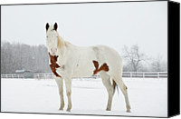 Horse Standing Canvas Prints - Horse In Snow Canvas Print by Jesse James Photography