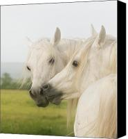 White Horses Canvas Prints - Horse Kiss Canvas Print by El Luwanaya Arabians