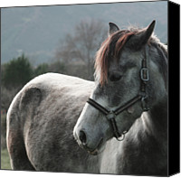 Bridle Canvas Prints - Horse Canvas Print by Saulgranda