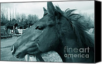 Fences Canvas Prints - Horse Sense Canvas Print by Steven Milner