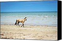 Solitude Photo Canvas Prints - Horse Walking On Beach Canvas Print by Vitor Groba
