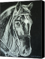 Charcoal Drawing Canvas Prints - Horse with no name Canvas Print by Carla Carson