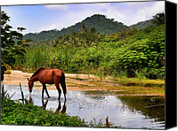 Skip Hunt Canvas Prints - Horse With No Name Canvas Print by Skip Hunt