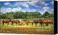 Grazing Canvas Prints - Horses at the ranch Canvas Print by Elena Elisseeva
