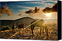 Grazing Canvas Prints - Horses Grazing At Sunset Canvas Print by Finasteride