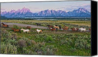 Grand Teton Canvas Prints - Horses Walk Canvas Print by Jeff R Clow