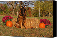Indiana Autumn Canvas Prints - Hoss in Autumn II Canvas Print by Sandy Keeton