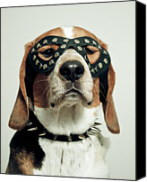 Hound Canvas Prints - Hound In Black Mask Canvas Print by Darren Boucher