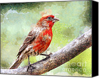 Finches Canvas Prints - House Finch Perched . 40D7930 Canvas Print by Wingsdomain Art and Photography