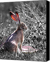 Easter Rabbit Photo Canvas Prints - How About Two Out of Three . Desaturated in Portrait Canvas Print by Wingsdomain Art and Photography