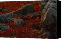 Autumn Scenes Canvas Prints - Huckleberry Bushes And Multi-hued Canvas Print by Michael Melford