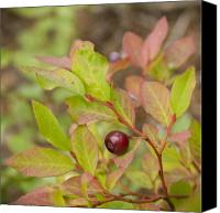 Huckleberry Canvas Prints - Huckleberry Canvas Print by Idaho Scenic Images Linda Lantzy