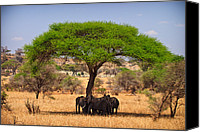 Elephants Canvas Prints - Huddled in Shade Canvas Print by Adam Romanowicz