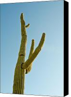 Humanlike Canvas Prints - Human Cactus Canvas Print by An  Pham