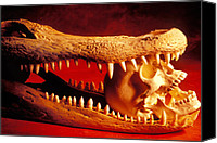 Jaws Canvas Prints - Human skull  alligator skull Canvas Print by Garry Gay