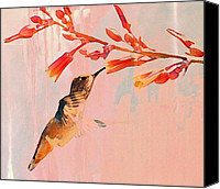 Annas Hummingbird Canvas Prints - Hummer Art Canvas Print by Fraida Gutovich
