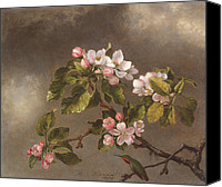 Humming Bird Canvas Prints - Hummingbird and Apple Blossoms Canvas Print by Martin Johnson Heade