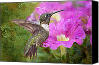 Male Hummingbird Canvas Prints - Hummingbird and Petunias Canvas Print by Bonnie Barry
