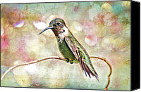 Vine Canvas Prints - Hummingbird Art Canvas Print by Bonnie Barry