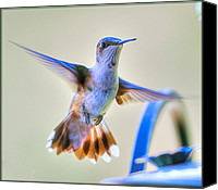 Humming Bird Canvas Prints - Hummingbird at the Feeder Canvas Print by Shirley Tinkham