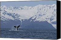 Whale Canvas Prints - Humpback Whale Tail Alaska Canvas Print by Flip  Nicklin