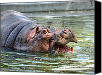 Hippopotamus Canvas Prints - Hungry Hungry Hippo Canvas Print by Paul Ward