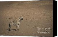 Kenya Canvas Prints - Hungry Hyena Canvas Print by Darcy Michaelchuk