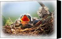 Spiritual Photo Canvas Prints - Hungry Tree Swallow Fledgling In Nest Canvas Print by Bob Orsillo