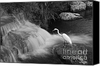 Waterfall Canvas Prints - Hunting Crane Canvas Print by Jeremiah Nichols