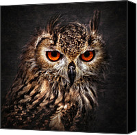 Red Pyrography Canvas Prints - Hunting Eyes Canvas Print by Ian David Soar
