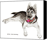 Working Dogs Canvas Prints - Husky with blue eyes and red collar Canvas Print by Jack Pumphrey