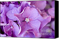 Blue Greeting Cards Canvas Prints - Hydrangea Canvas Print by Frank Tschakert