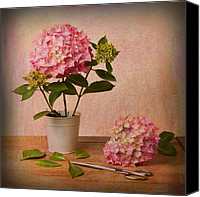 Textured Floral Canvas Prints - Hydrangea Pink Flower Canvas Print by Ian Barber