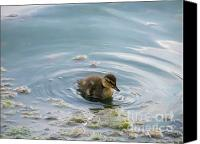 Buffet Canvas Prints - I am Duck Canvas Print by Jack Norton