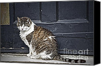 Stripped Cat Canvas Prints - I Am Getting Along Canvas Print by Gwyn Newcombe