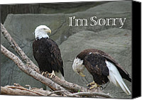 Bald Eagle Canvas Prints - I am Sorry Canvas Print by Michael Peychich