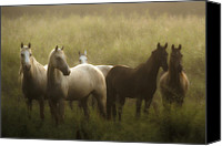 Horse Canvas Prints - I Dreamed of Horses Canvas Print by Ron  McGinnis