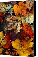 Orange Digital Art Canvas Prints - I Love Fall 2 Canvas Print by Joanne Coyle