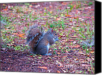 Critters Canvas Prints - I Love Squirrels In The Park Canvas Print by Vilma Rohena
