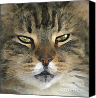 Stripped Cat Canvas Prints - I Miss Him Sometimes ... Canvas Print by Gwyn Newcombe