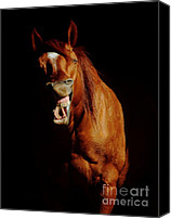 Talking Photo Canvas Prints - I Said HAY Not HEY Canvas Print by Robert Frederick