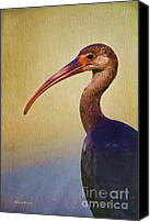 Ibis Canvas Prints - Ibis Nature Pose Canvas Print by Deborah Benoit