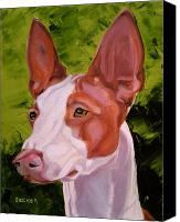 Hound Drawings Canvas Prints - Ibizan Hound Canvas Print by Susan A Becker