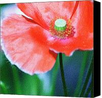 Decorating Mixed Media Canvas Prints - Icelandic Poppy Canvas Print by Bonnie Bruno