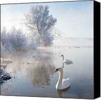Two Animals Canvas Prints - Icy Swan Lake Canvas Print by E.M. van Nuil